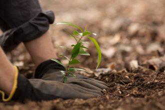 Hai să plantezi un copac primăvara asta! Unde? Îți spun eu...